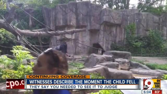 Gorilla Killed After Dragging Boy who Fell into Exhibit